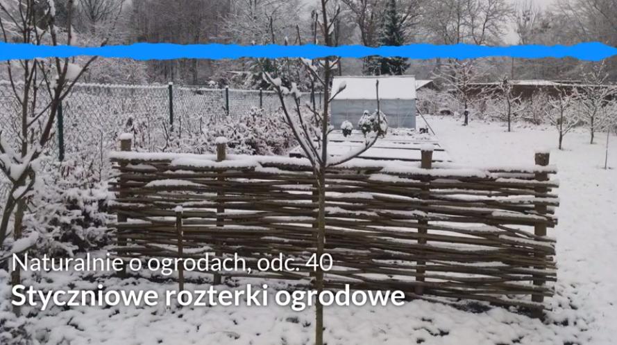 NoO 40: Styczniowe rozterki ogrodowe